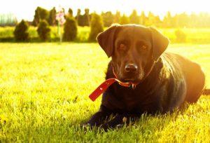 Gør din hund også i haven